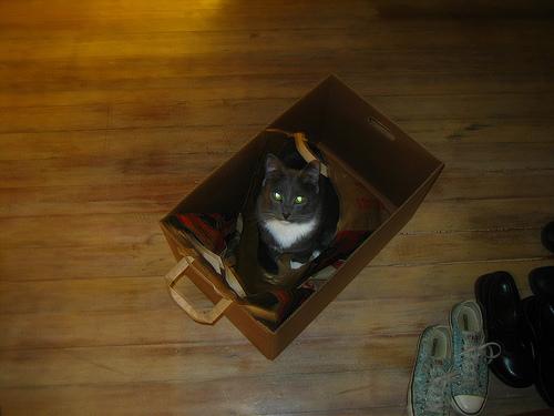 gunner-in-a-box.jpg